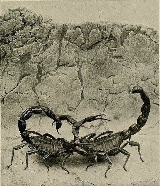 scorpions scorpio
