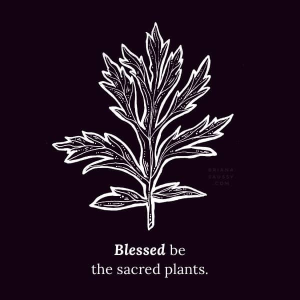 Blessed be the sacred plants.